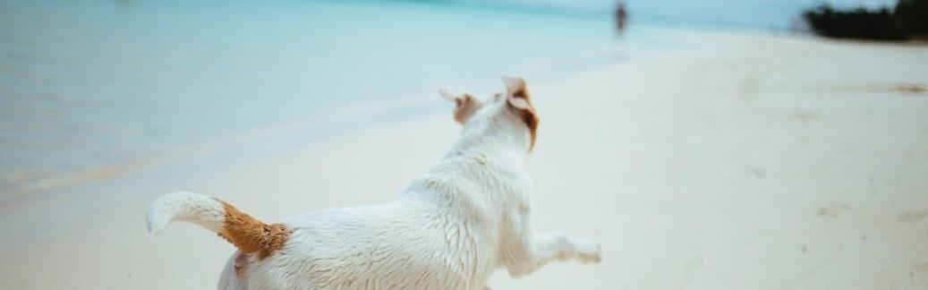 Un chien se balandant au soleil sur la plage